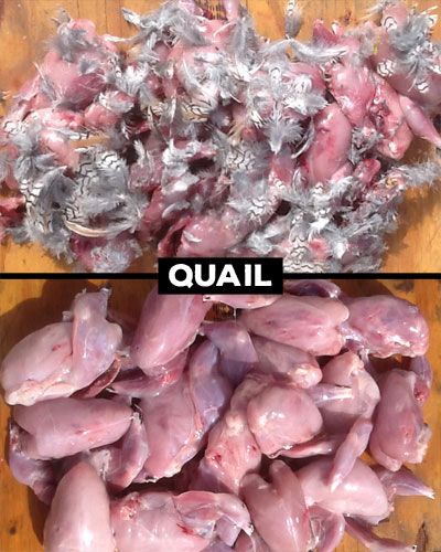 BeforeAfter_Quail_w